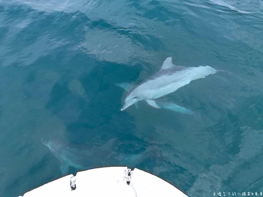 熊本天草海豚親子遊