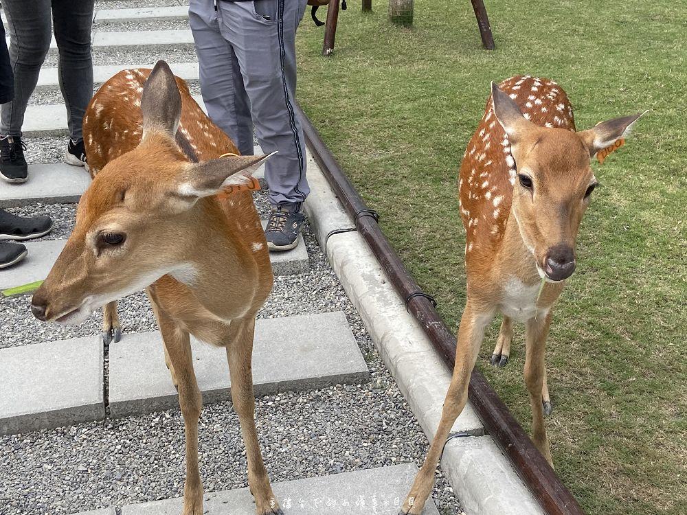 張美阿嬤農場餵鹿簡介預約門票DIY